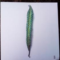 Weidenblatt
